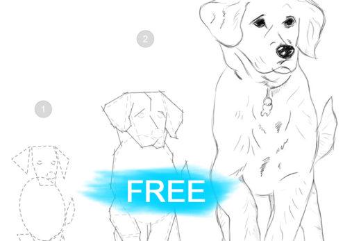 download basic drawing skills workbook free